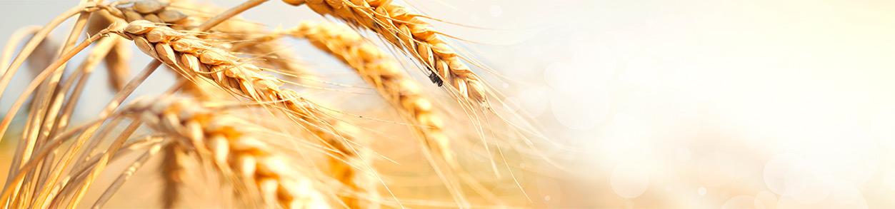 Schon in der zweiten Generation ist Kublun-Landmaschinen im Dienste der Landwirtschaft und Baumschulen tätig.